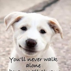 love-dog-motivational-quotes