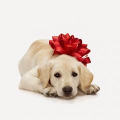 Dog-Christmas-gift-wallpapers142014